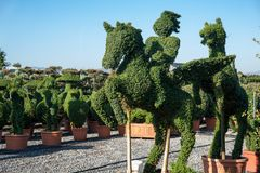 Topiary horseman sculptured in a boxwood bush Royalty Free Stock Photography