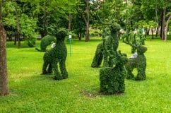 Topiary kaniner som klippas ut ur buskar Arkivbild