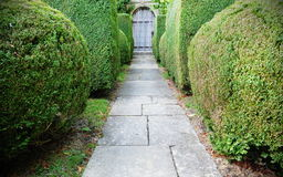 Topiary Lined Garden Path. View of a Beautiful Stone Paved Topiary Lined Garden Path Leading to an Old Oak Doorway Royalty Free Stock Image