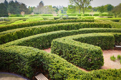 Topiary Maze Stock Photo