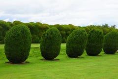 Topiary, Montacute dom, Somerset, Anglia zdjęcie royalty free
