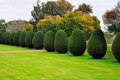Topiary Montacute hus, Somerset, England Royaltyfri Foto