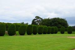 Topiary Montacute hus, Somerset, England Royaltyfria Bilder