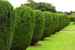 Topiary Montacute hus, Somerset, England Arkivfoto