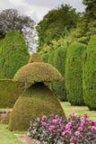 Topiary no jardim Imagens de Stock Royalty Free