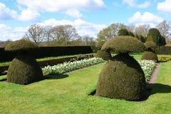 Topiary och tulpan, Hinton Ampner Garden, Hampshire, England Royaltyfria Bilder
