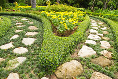 Topiary. Ogrodowa Design/sztuka Obraz Stock