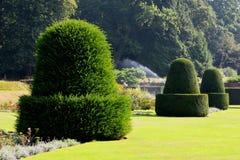 Topiary på Blickling Hall, Aylsham, Norfolk Arkivfoto