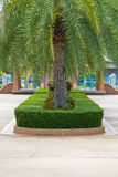 Topiary in the park Royalty Free Stock Photo