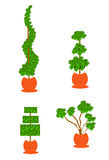 Topiary planters Stock Images