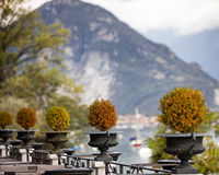 Topiary Plants on Patio in Italy Stock Photo