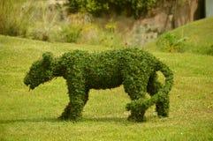 Topiary postać lwica Zdjęcie Royalty Free