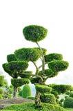 topiary praca Zdjęcie Royalty Free