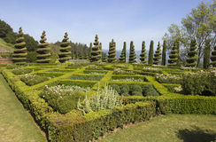 Topiary que ajardina em um jardim inglês formal Fotos de Stock Royalty Free