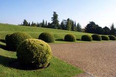 Topiary ronde struiken of bomen Royalty-vrije Stock Afbeelding
