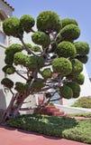 Topiary Royalty Free Stock Photo