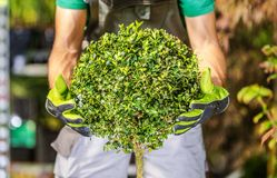 Topiary-Strauch, der gut getan formt lizenzfreie stockfotos