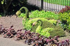 Topiary swans, Tamworth. Stock Image