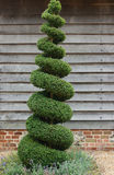Topiary Tree Stock Photography