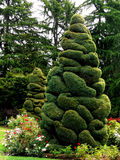 Topiary Tree Royalty Free Stock Photography