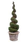 Topiary tree - Box. Royalty Free Stock Image