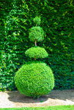 Topiary tree Royalty Free Stock Images