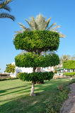 Topiary tree in the park Royalty Free Stock Photos
