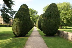 Topiary trees avenue Royalty Free Stock Photography