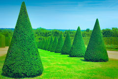 Topiary trees Stock Images
