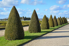 Topiary trees Royalty Free Stock Image