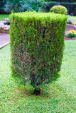 Topiary trimmed bush. In the garden at summer royalty free stock images