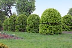 Topiary tuin in Nationale Botanische Tuin, Kiev Stock Foto