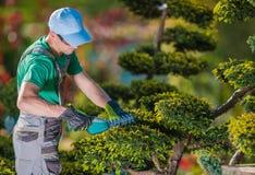 Topiary Tuinman Plant Shaper stock afbeeldingen