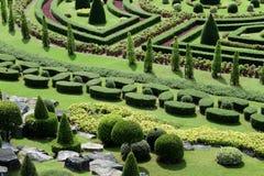 Topiary w Angielskim Formalnym ogródzie Zdjęcie Royalty Free