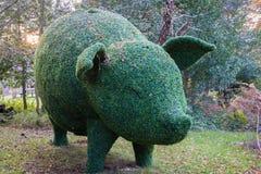 Topiary świnia Fotografia Royalty Free