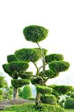 Topiary work Royalty Free Stock Photo
