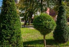 Topiarykunst auf den Straßen der Herbststadt Gebildete Evergreens Geschorener Thuja und Eibe stockfotografie