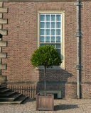 Topiarymandarinebaum und Villa Stockbild