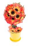 Topiarysonnenblume lokalisiert Stockfotografie