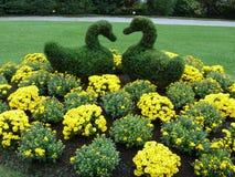 Topiarysvanar i vårträdgård Fotografering för Bildbyråer