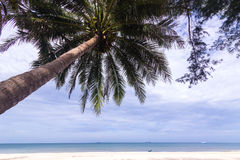 The topical beach and coconut tree. With huge cloud in the sky Royalty Free Stock Photos