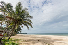 The topical beach and coconut tree. With huge cloud in the sky Stock Images