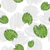 Topical Botany Hibiscus flower and Monstera leaf seamless pattern chic fashion design with dark purple background. Vivid Topical Botany Hibiscus flower and Royalty Free Stock Photo