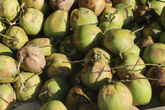 Topical green coconuts. Coconut water. Palawan Philippines Stock Images