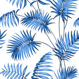 Topical palm leaves Stock Photo