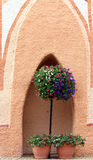 Topieary planter in alcove. Topiary in terra cotta planter in alcove Royalty Free Stock Images