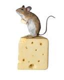 Topo che sta sul formaggio isolato contro fondo bianco Immagini Stock