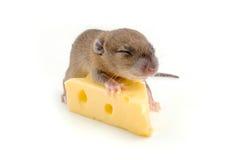 Topo con una fetta di formaggio svizzero Fotografia Stock Libera da Diritti