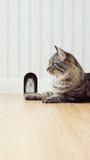 Topo e gatto Immagini Stock Libere da Diritti