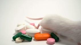 Topo e pillole sperimentali archivi video